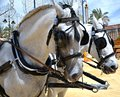 Horse Fair in Jerez Royalty Free Stock Photo