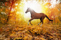 Horse In Fall Park