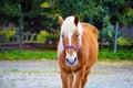 Horse farm image walking close background Stock Photo