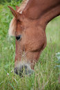 Horse feed fresh green grass Stock Photos
