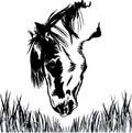Horse feeding on grass illustration Royalty Free Stock Photo