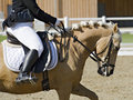 Horse with female rider dressed in classical dressage habit light brown at a competition Royalty Free Stock Photos