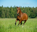 Horse in field Royalty Free Stock Photos