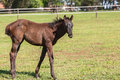 Horse foal colt stud farm mare and on field Stock Image