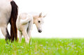 Horse Foal Looking Isolated On...