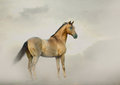 Horse in fog golden a Royalty Free Stock Photos