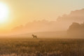 Horse in a foggy field Royalty Free Stock Photo