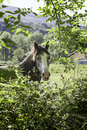 Horse in the forest detail of a wild animal wild mammal free Royalty Free Stock Photos