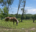 Horse on fringe of  forest. Stock Image