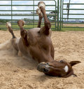 Horse fun having rolling on the sand Royalty Free Stock Photography