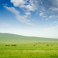 Horse on the grassland with sky Stock Photos
