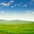 Horse on the grassland with sky Stock Image