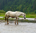 Horse a grazes on the river Royalty Free Stock Photography