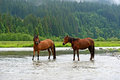 Horse a grazes on the river Royalty Free Stock Photos
