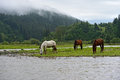 Horse a grazes on the river Royalty Free Stock Photo