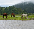 Horse a grazes on the river Royalty Free Stock Image