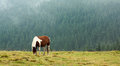 Horse grazing on mountain pasture in the early misty morning Royalty Free Stock Photography