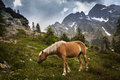 Horse grazing in the mountains Royalty Free Stock Image