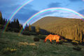 Horse grazing mountains beautiful rainbow Royalty Free Stock Photography