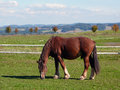 Horse grazing on the pasture Royalty Free Stock Photography