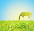 Horse grazing on spring pasture blue sky grass Royalty Free Stock Image