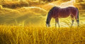 Horse grazing in sun drenched field Stock Photos