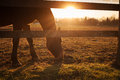 Horse grazing at sunset Royalty Free Stock Photo