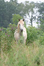 Horse grazing in tall grass Royalty Free Stock Photo