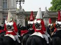Horse Guards Royalty Free Stock Photo