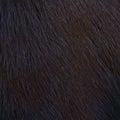 Horse Hairy Texture