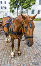 Horse in harness on a city street Royalty Free Stock Photo