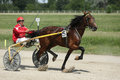 Horse during harness race brown and his jockey pictured in ploiesti romania Stock Images