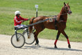 Horse during harness race and his jockey pictured in ploiesti romania Stock Photos