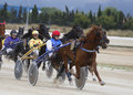 Horse harness race riders compete with their sulky during a in palma de mallorca s hippodrome spain Stock Images