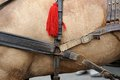 Horse harness the on a wearing brown Stock Photography