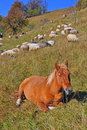 The horse has a rest on a hillside. Stock Photo
