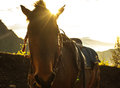 The horse have sunrise with could on mountain Stock Photography