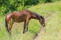 Horse having lunch in fresh summer grass Royalty Free Stock Photo