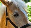 Horse head against bright sunlight closeup Stock Photo