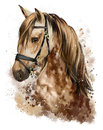 Horse head drawing Royalty Free Stock Photo
