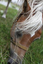 Horse head eating grass green Stock Photo