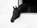 Horse head looking out the window. Royalty Free Stock Photo