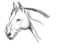 Horse head sketch a on paper Royalty Free Stock Images