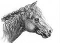 Horse head sketch on paper Royalty Free Stock Images