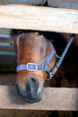 Horse head in a stall Stock Photos