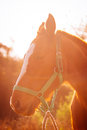 Horse head at sunset Royalty Free Stock Photos