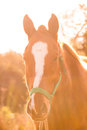 Horse head at sunset Stock Photos