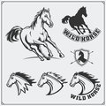 Horse heraldry coat of arms. Labels, emblems and design elements for sport club. Royalty Free Stock Photo