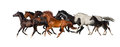 Horse herd isolated on white Stock Photo