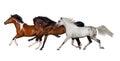 Horse herd isolated on white banner for website Stock Photo